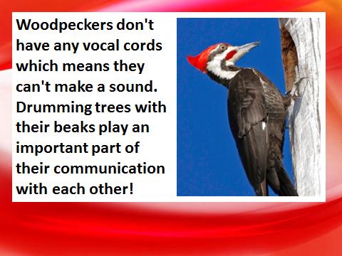 bird-fact-4