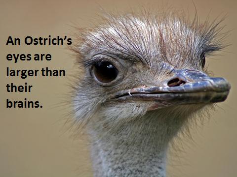 bird-fact-5