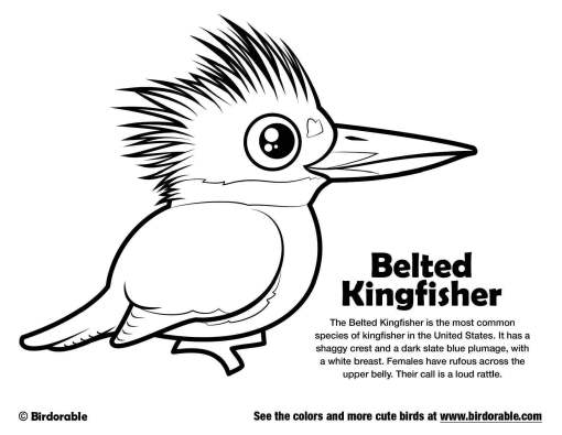 birdorable-belted-kingfisher-coloring-page