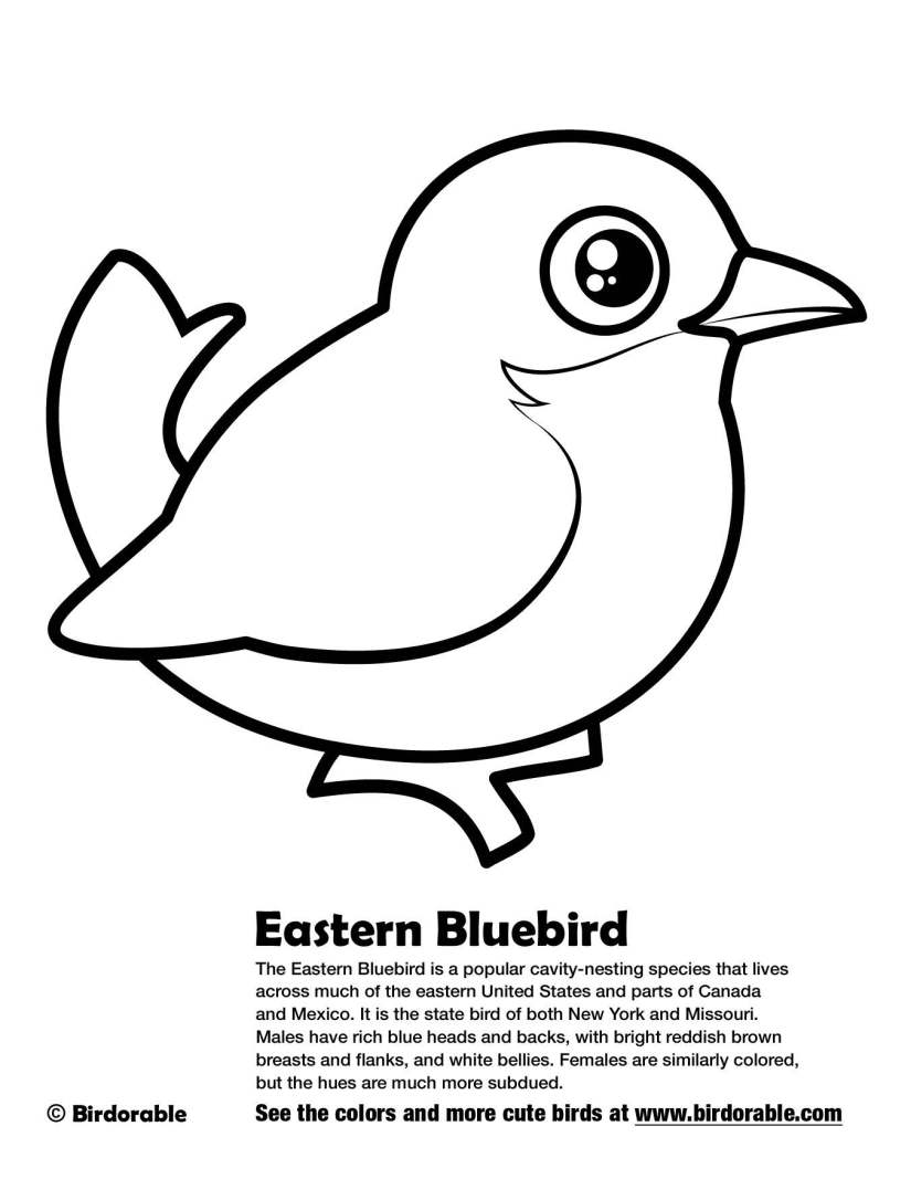 birdorable-eastern-bluebird-coloring-page