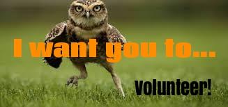 owl volunteer pic