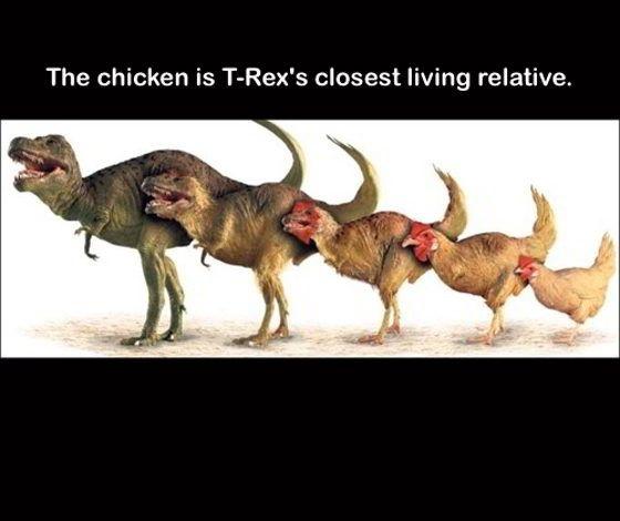 trex-chicken