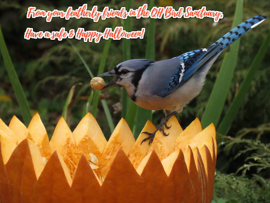 halloweenbird