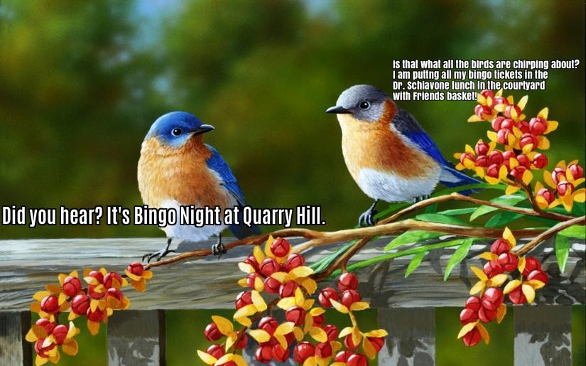bingo-birds